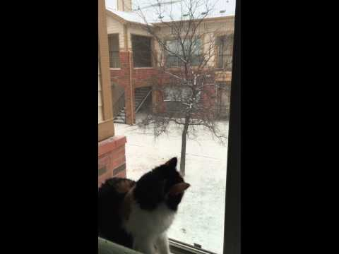 Texas cat first time seeing snow