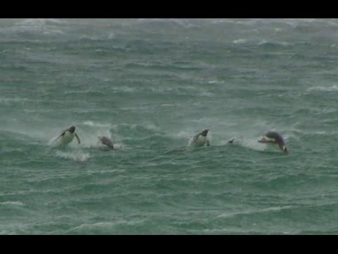 Penguins | Smithsonian Ocean