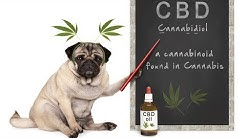 CBD for Dogs: Benefits, Side Effects & How Much CBD to Give Your Dog