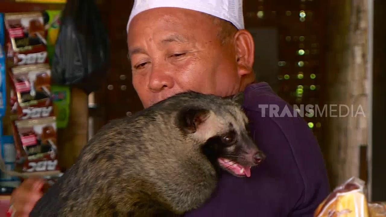 Dado Musang Pandan Gemuk Yang Sangat Penurut Si Otan 18 02 19