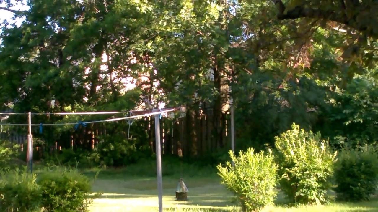 blue jay in backyard youtube