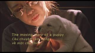 RED QUILL - Chú Chó QUILL