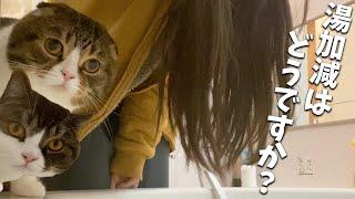 湯加減を手で触ってチェックしてくれる番頭猫がこちらですw