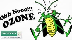 Expert Pest Control Gold Canyon AZ: 3 Top Pests Of 2019 (480-493-5028) Ozone Pest Control