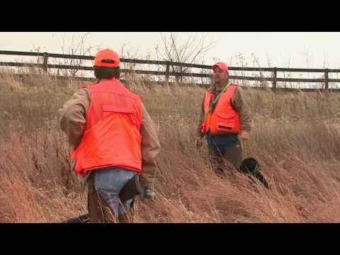 Native Quail hunt in Kentucky