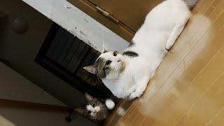 雷にビビってキョロキョロする猫を観察してみた