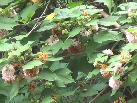 honey tree (madhusree honey, farm 9496391220)