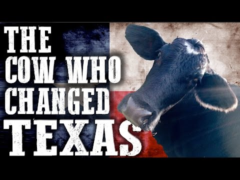 The Cow Who Changed Texas Forever   Rowdy Girl