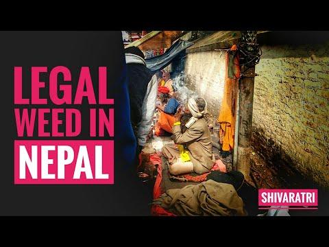 Legal WEED in Nepal - Shivaratri Special (Ganja, Kush, Hindu god, Must watch)