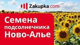 Обзор семян подсолнечника Ново-Алье