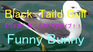 【社会人バンド BTG】Funny Bunny コピー【ライブ】