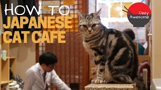Video BEST Cat Cafe Video You Will EVER Watch! download MP3, 3GP, MP4, WEBM, AVI, FLV September 2018