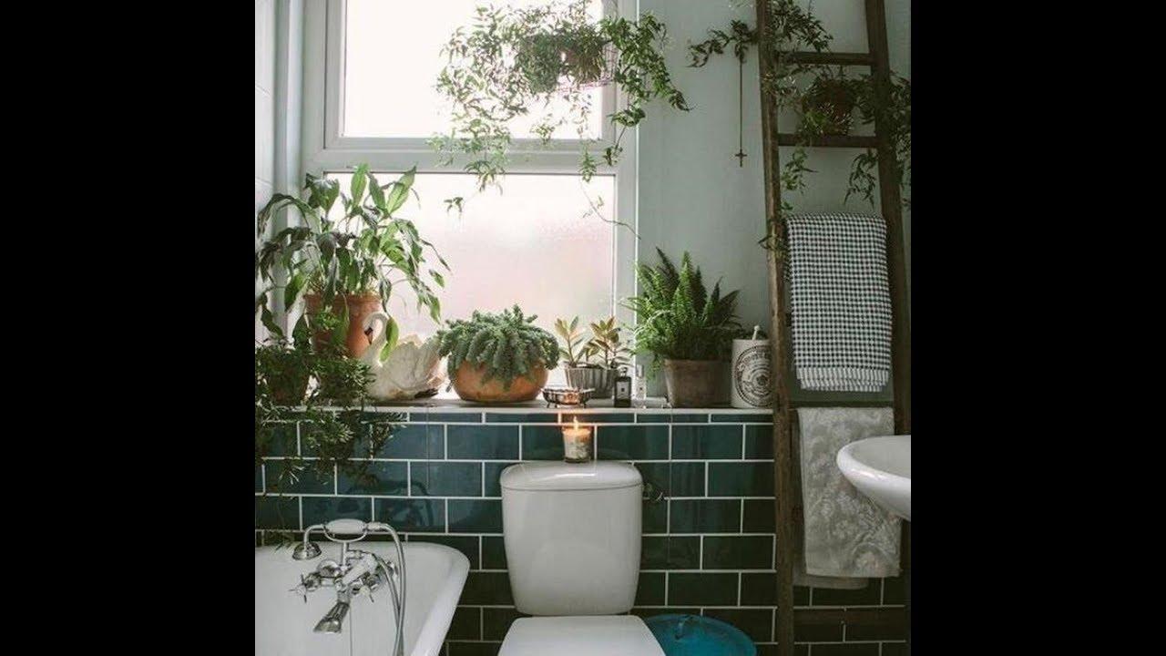 Loại cây bạn nên trồng trong nhà vệ sinh