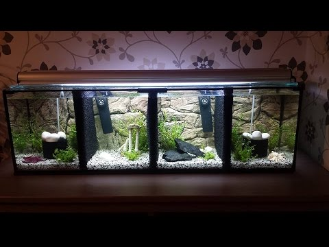 My betta fish update nr 10 my 4 section divided betta for Divided fish tank