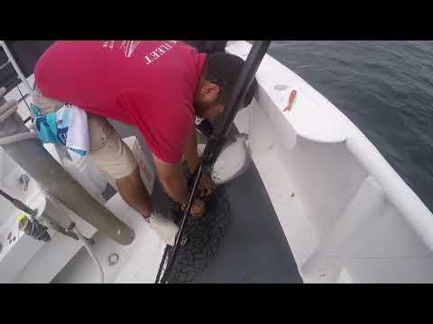 Full Limit Trip! Great Ocean Fluke Fishing