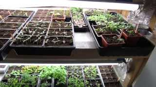 February 2014 Tour Of The Rusted Garden: Thank Goodness For Grow Closets! - The Rusted Garden 2014