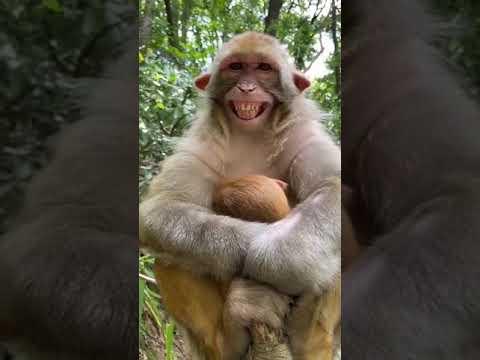 Hayvanat Bahçesi Şarkıları -  Çocuk ve Bebek Şarkıları | Kids TV Türkçe