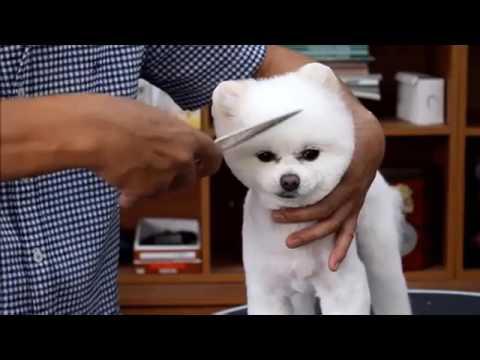 PET GROOMING ||: Grooming  Cute Pomeranian Dog.