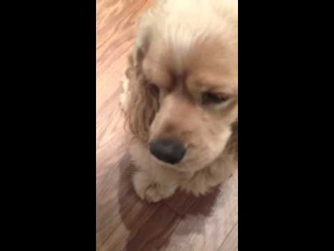 Guilty Puppy In Trash Gives The Cute Puppy Dog Eyes Youtube