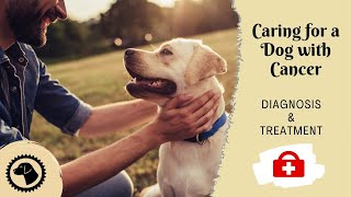 Caring For A Dog With Cancer | DOG HEALTH 🐶 Brooklyn's Corner