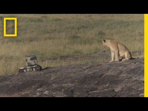 Photographing Lions With Technology | National Geographic