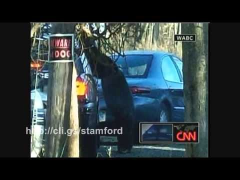 Travis The Chimpanzee Attacks Woman In Stamford Connecticut 2009