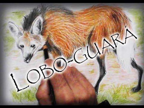 desenhando-e-informando:-lobo-guará