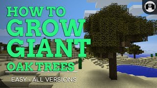 How To Grow GIANT Oak Trees | Minecraft 1.13.1 (Works on all versions & platforms)