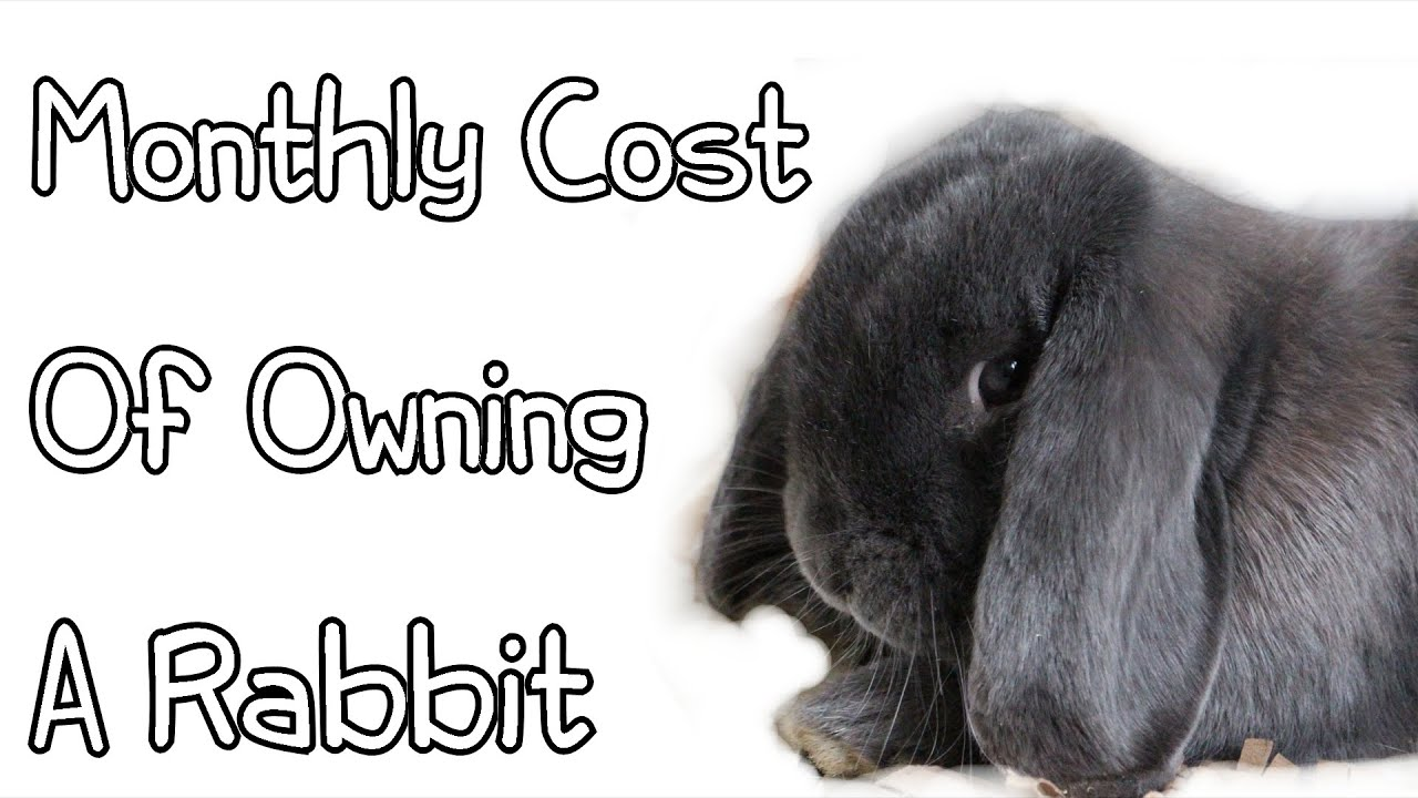 Monthly Cost Of Owning A Rabbit Youtube