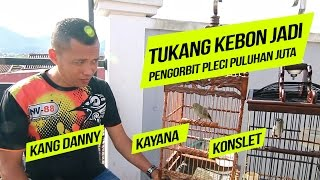 KISAH SUKSES : Tukang Kebon Orbitkan Pleci Gacor Kayana 95 Juta