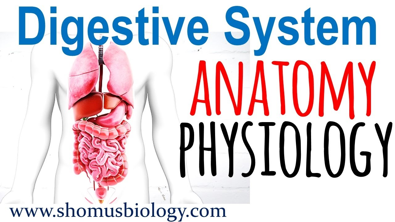 Digestive system anatomy and physiology | Digestive system lecture 1 ...