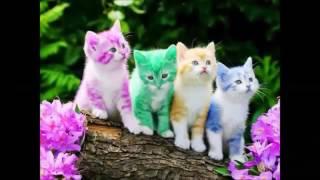 Lagu anak - anak. Kucing meong - meong