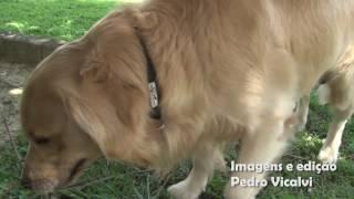 Vereador Izaias Colino conhece a Praça dos Dogs