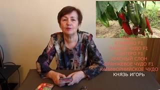 видео Выращивание черешкового и листового сельдерея из семян, выбор и правильная посадка