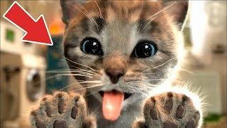 Sevimli Kedi Kostüm Partisi #Çizgifilm Tadında Yeni Oyun
