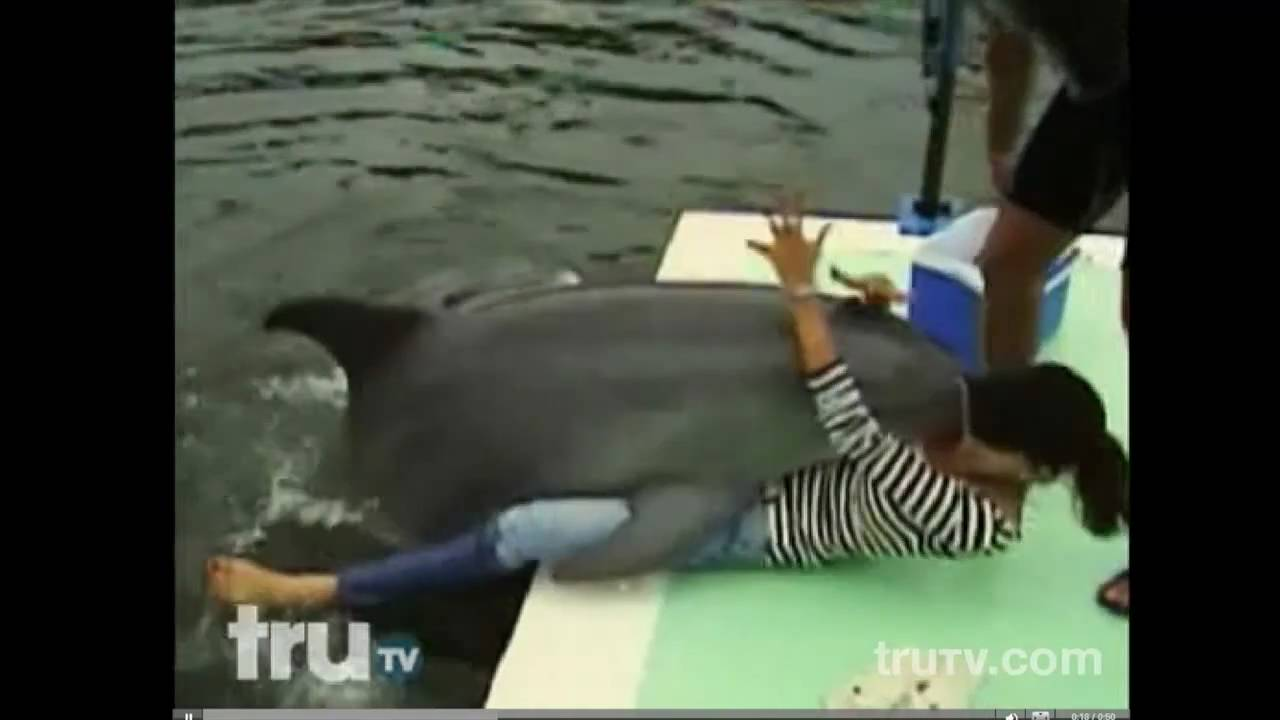 *Worlds Funniest* Dolphins Humping Humans - YouTube