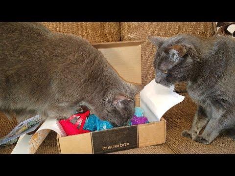 MeowBox (April 2018) Cat Subscription Unboxing - Jericho & Thunder