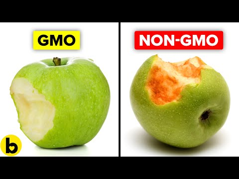 Genetically Modified Foods and Their Pros And Cons