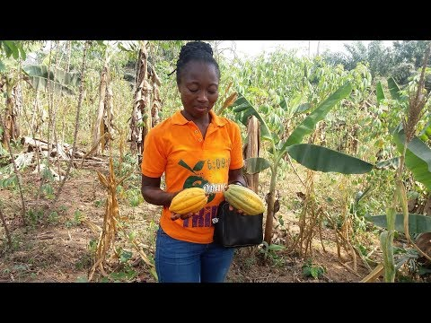 GHANA Vlog: BEAUTIFUL COCOA FARM