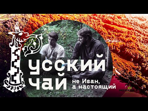 Русский чай. Кто и как делает наш чай в Краснодарском Крае. Не Иван, а настоящий.