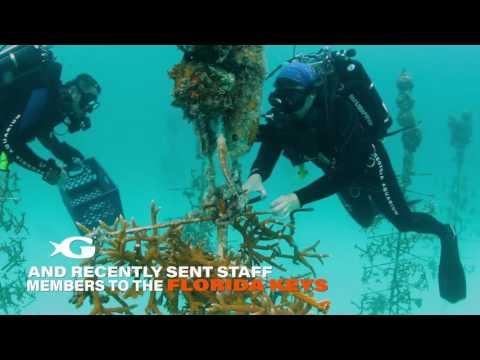 Coral Restoration In The Florida Keys