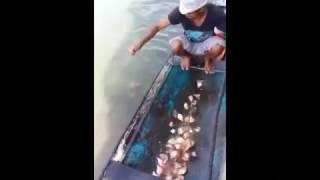 Ловля пираньи