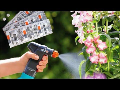 Янтарная кислота -  универсальная  подкормка для растений