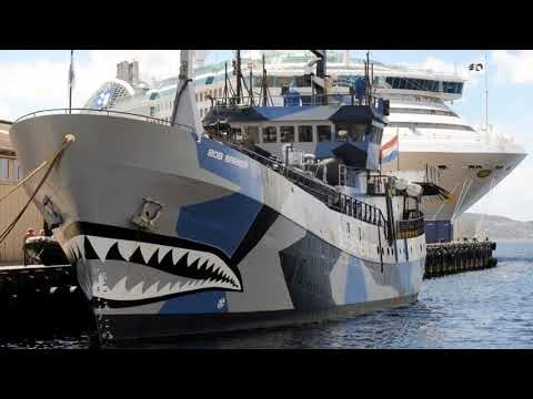 News Update Sea Shepherd to stop intercepting Japanese whaling vessels 29/08/17
