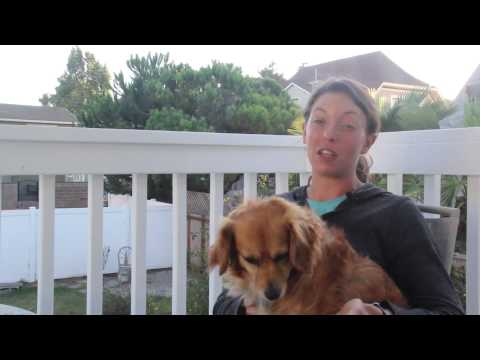 How is a Professional Dog Walker Different?