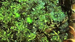Skyrim Dungeon run mini! Ep:5 Moss Mother Cave
