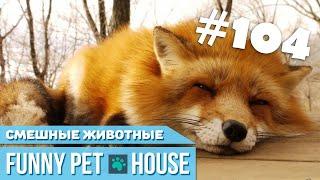 СМЕШНЫЕ ЖИВОТНЫЕ И ПИТОМЦЫ #104 АВГУСТ 2019   Funny Pet House