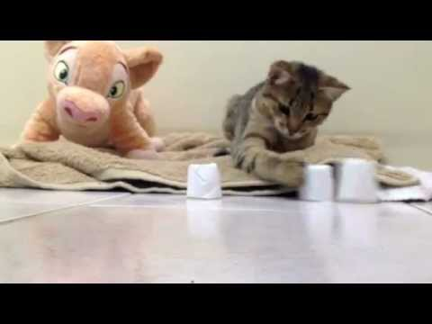 Guessing game with kitty