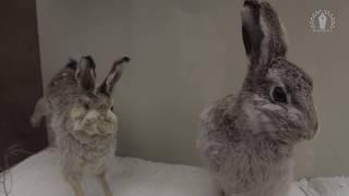 Животные: секреты голых землекопов и историческая ДНК