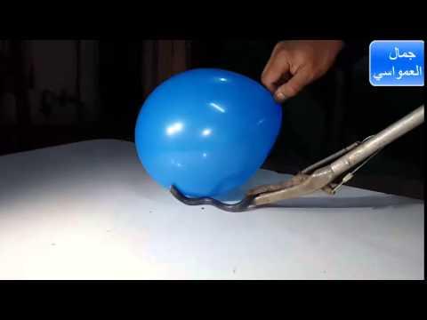 لأول مره يتم تصوير الاسود الخبيث  فيديو كيف يلدغ البلالين  مع جمال العمواسي